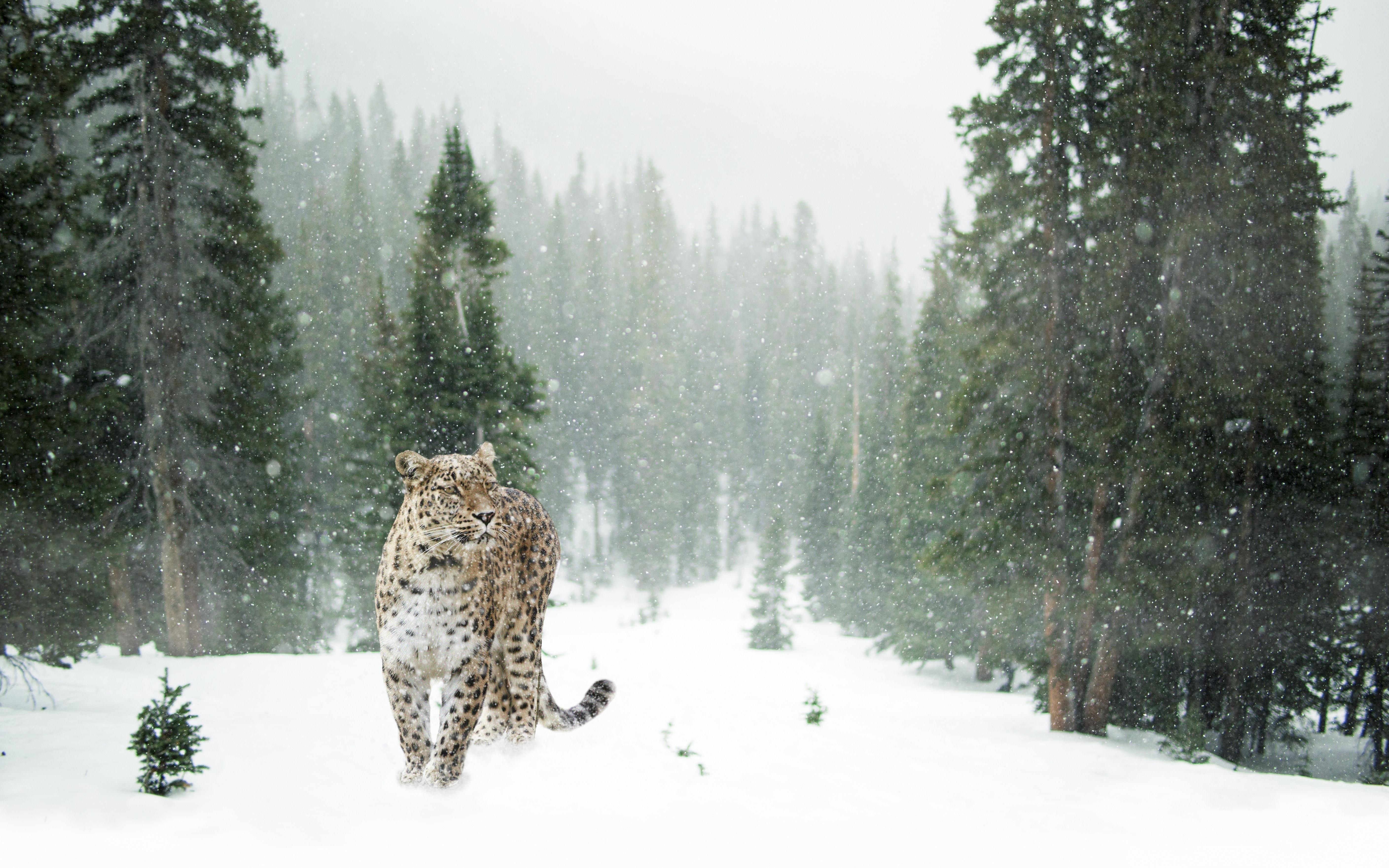 Rare Wildlife