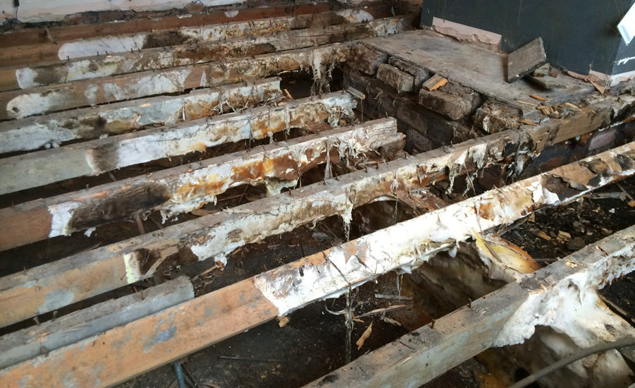 Everything You Need to Know About Dry Rot in the Home